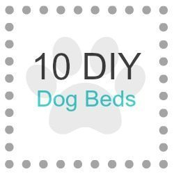 10 Visually Appealing Dog Beds