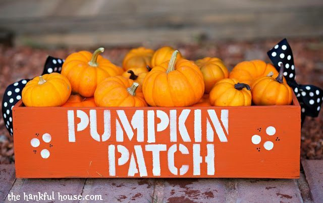 Pumpkin Patch 045