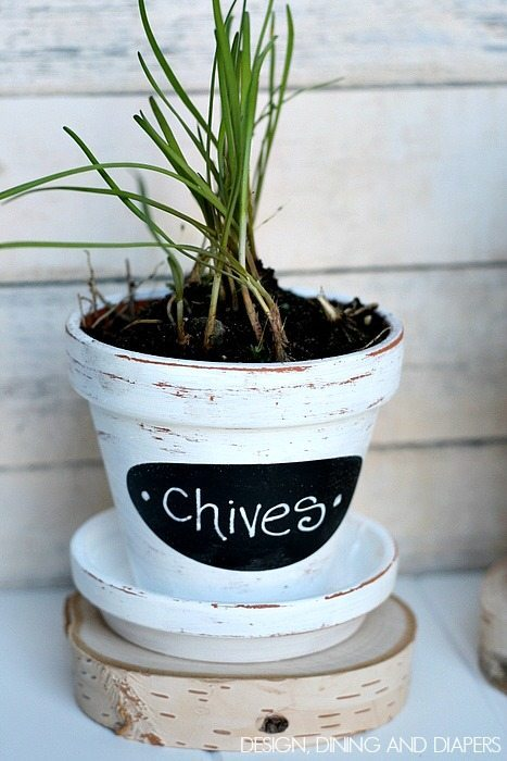 Chives! What a cute little DIY Pot!