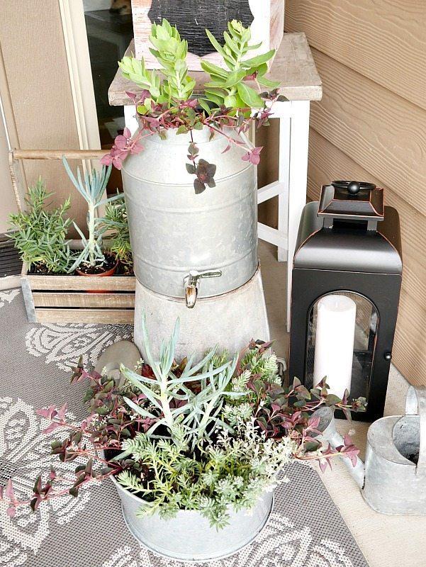 Bucket of succulents