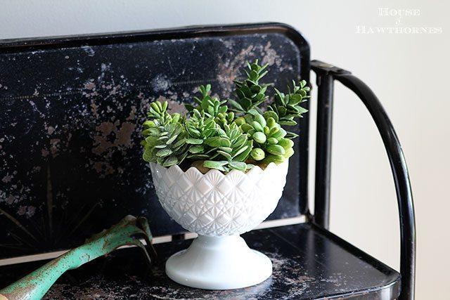 Rubber-Succulents-9671