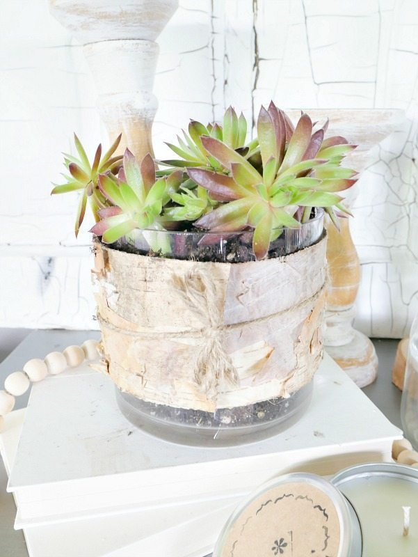 Simple Entertaining Tips- Succulents in planter