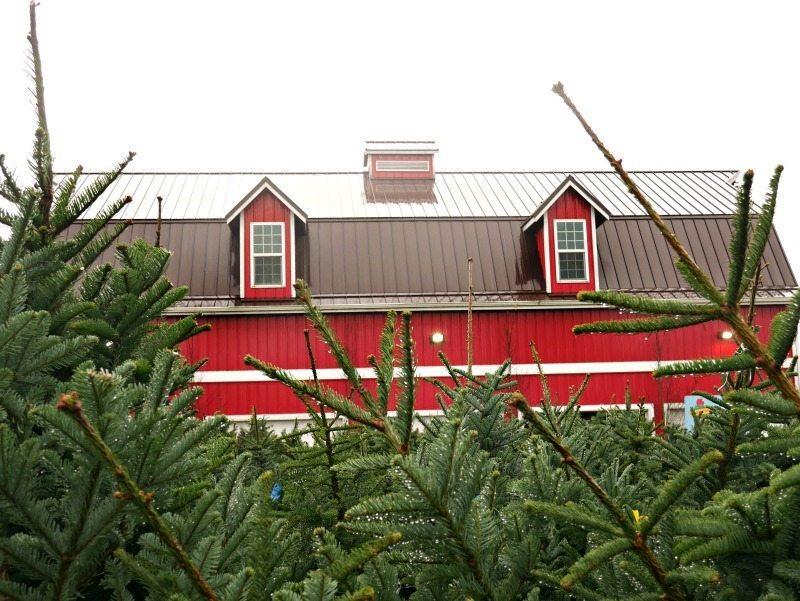 christmas-tree-hunt-2