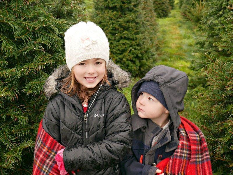 christmas-tree-hunt-3